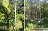 2.5 Acres Land for sale in Passara, facing to Buththala Rd.