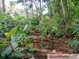 138 Perches Land at 9 th Mile post Igala, Elpitiya