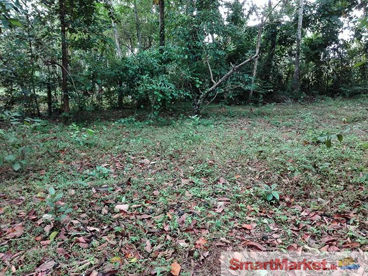 105 Perches Land for Sale in Minuwangoda