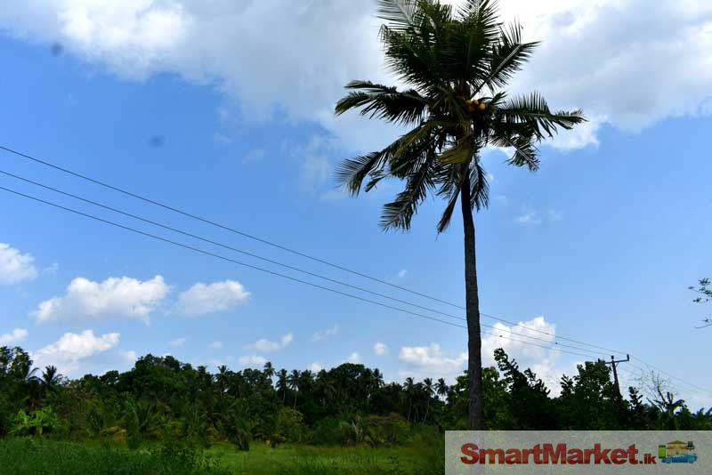 183 Perches Land for Sale in Anuradhapura