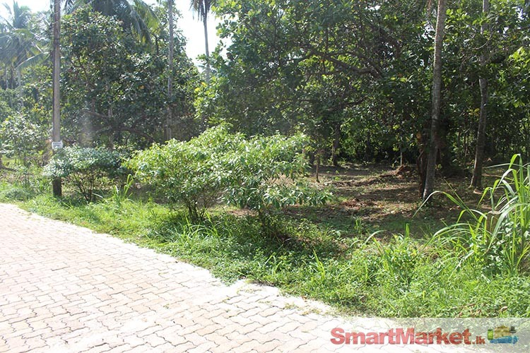 Two Land Blocks for Sale in Batagolla, Yakkala.