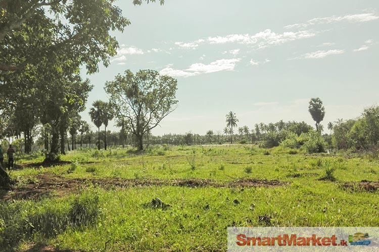 Flat Bare Lands for Sale in Pasikuda and Eravur