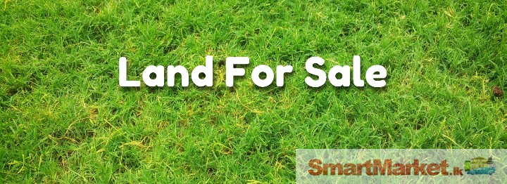 Valuable land for sale in gampaha