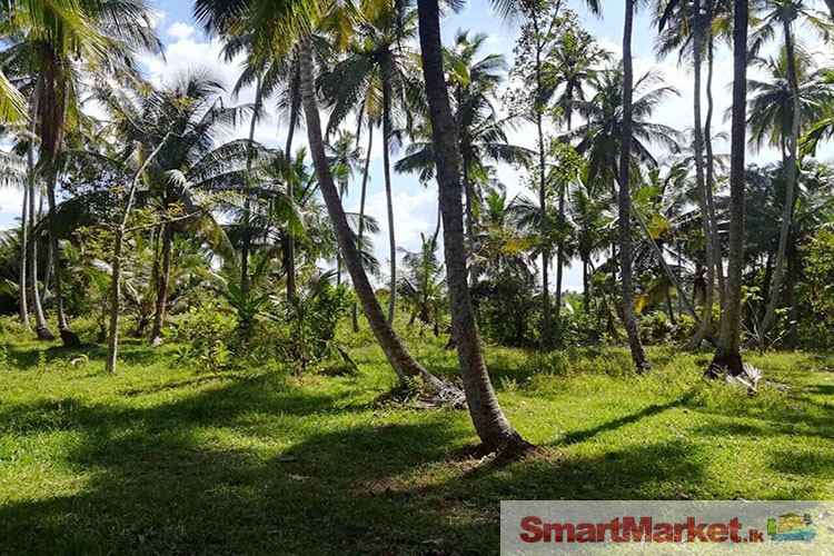740 Perches Coconut Land With House for Sale in Kuliyapitiya, Weerambuwa.
