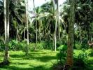 20 perches land for sale in Chilaw