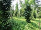 Well Cultivated 152 Perches Land for Sale in Matale.