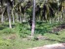 Valuable Coconut Land for Sale in Madampe
