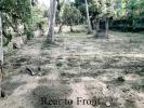 40 Perches Land for Sale in Wennappuwa City