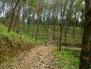50 Acres Rubber Land for sale at Dewalegama, Kegalle.
