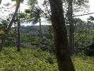 320 Perches Land for Sale in Hapugala, Galle.