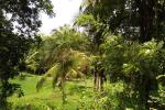 25 Acres of Valuable Coconut Land for Sale in Dodamgaslanda