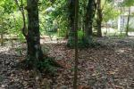 34 perches Land for Sale in Kinigama, Gampaha.